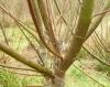 Medicinal Forest Garden Trust