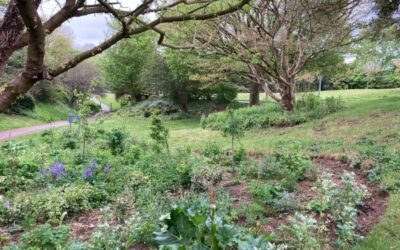 Discovering Harlow Town Park Forest Garden